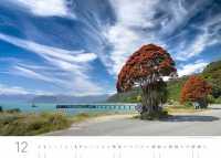 Pōhutukawa (neuseeländischer Weihnachtsbaum) bei Jackson Bay (Südinsel)