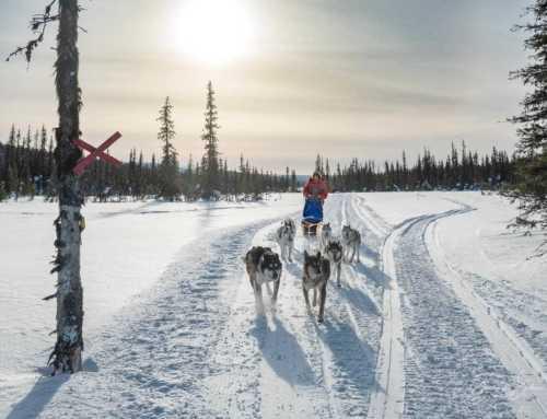 Huskycamp in Schwedisch-Lappland