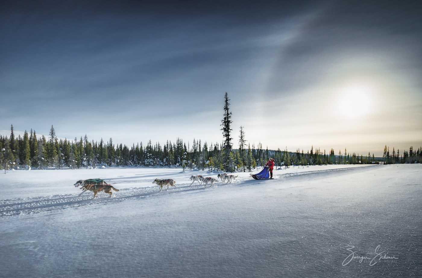 Hundeschlittenfahren Nordschweden - Huskytour